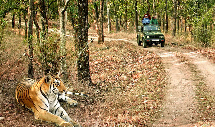 Jim Corbett National Park, the 4th best tiger reserve in india