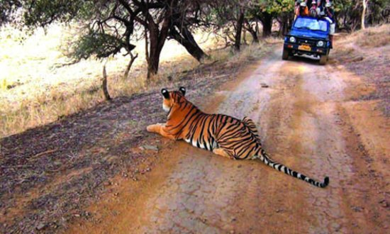 Ranthambore National Park, the 3rd best tiger reserve in india