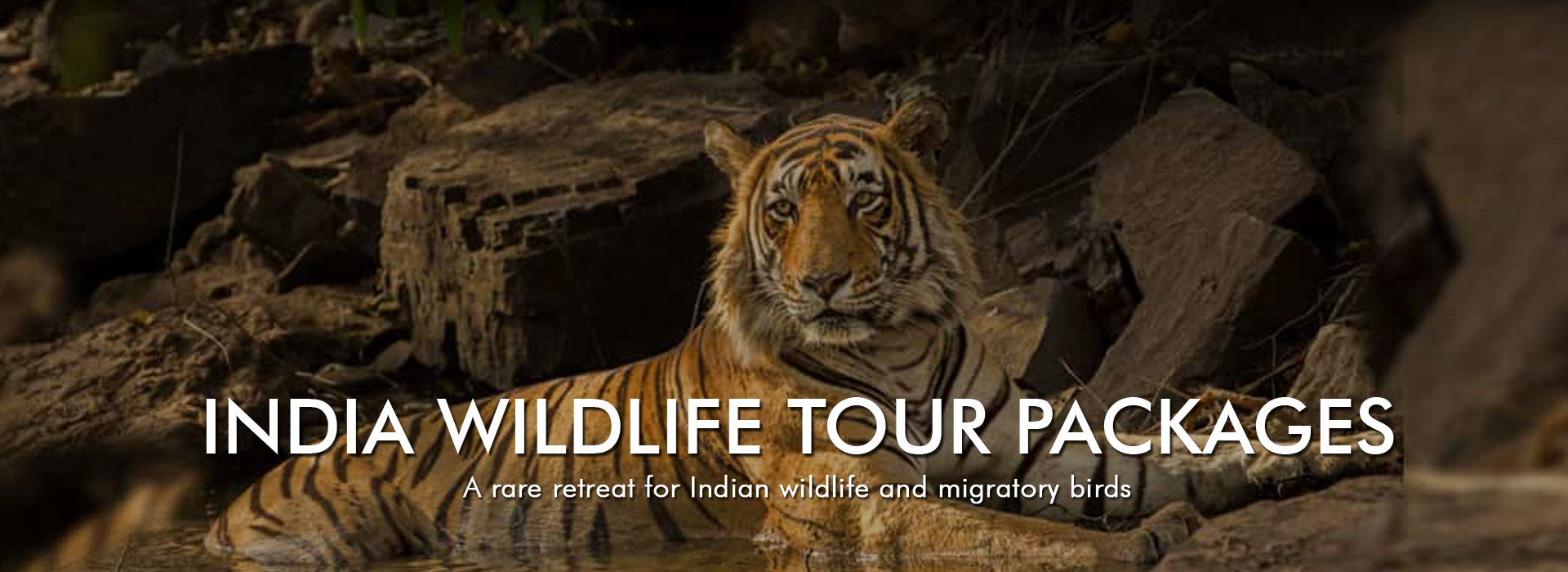 India-Wildlife-Tour-Packages-slide-1