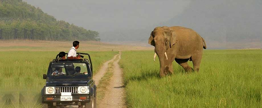 Safari in Jim Corbett: types of safaris, safari zones, rivers, best places and time to visit, how to reach, etc.