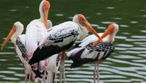 Places to Visit near Agra -Keoladeo Ghana National Park