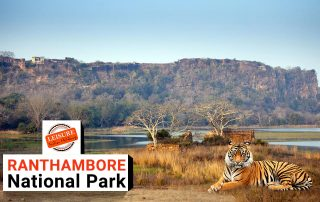 Ranthambore National Park – Area, Location, Safari Timings & Best Time to Visit