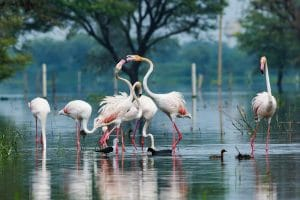 Visit to Keoladeo Ghana National Park in Agra